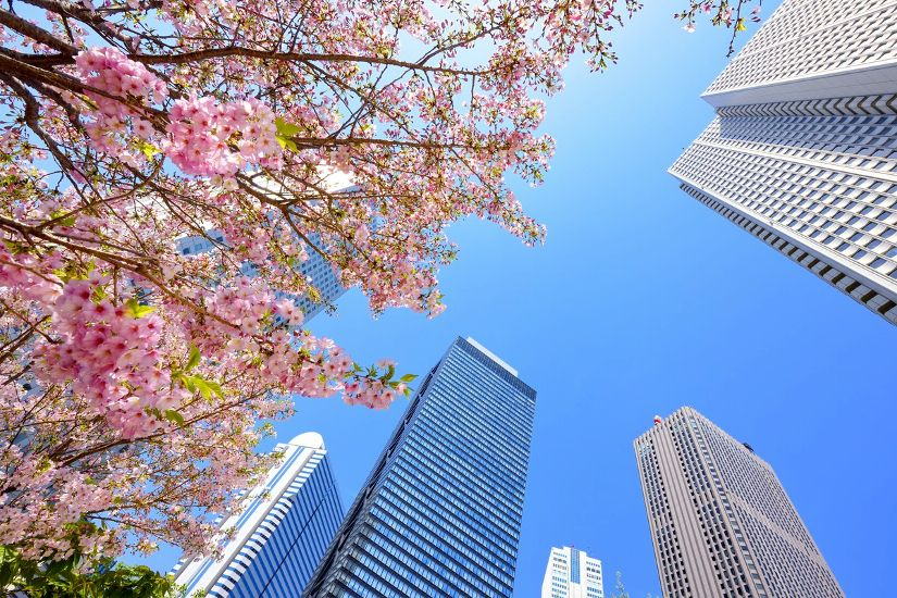 Токио. Синдзюку. Небоскребы и цветы