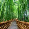 Киото. Арасияма. Бамбуковая роща
