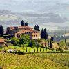 Тоскана. Виноградник